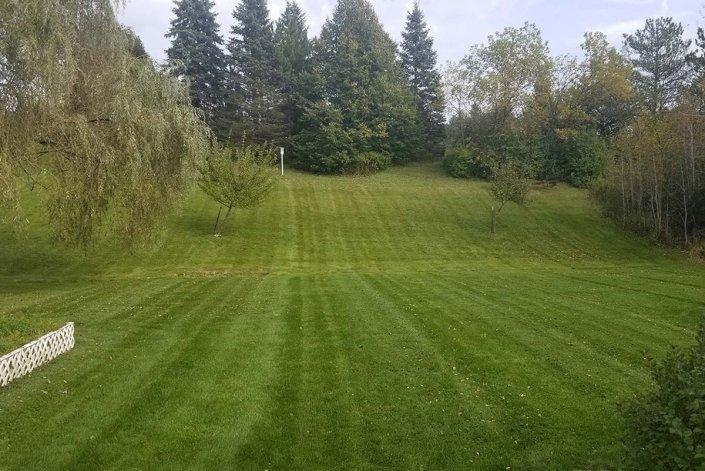 grass professionally cut