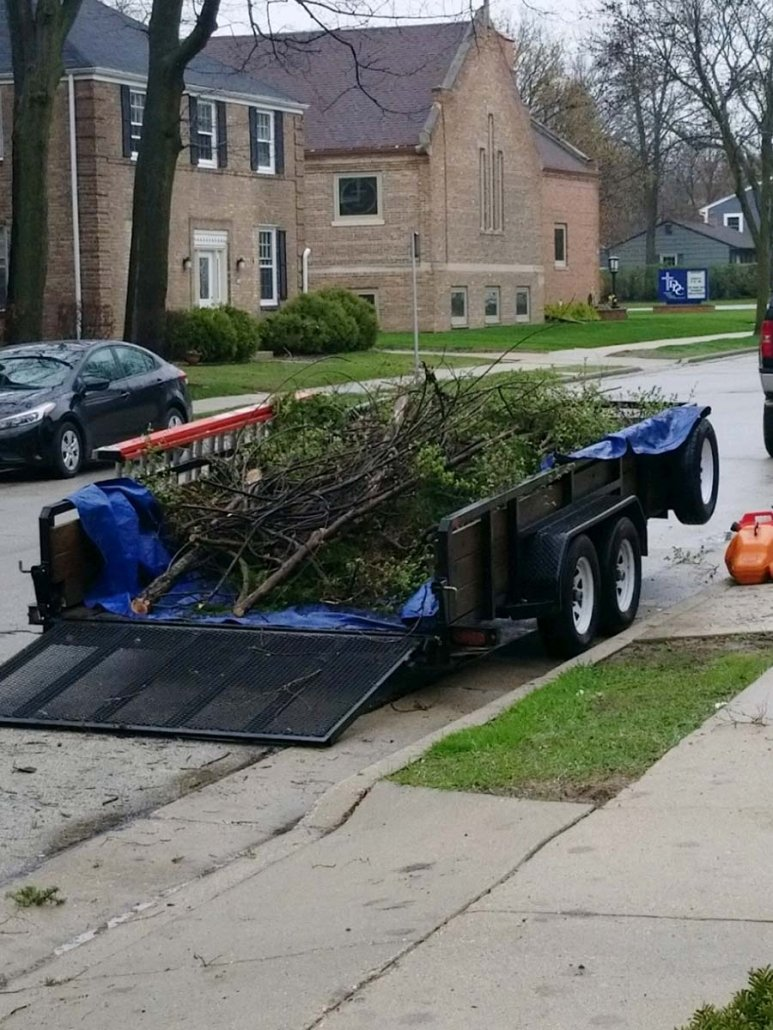 remove trees landscaping
